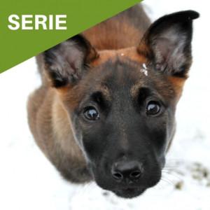 Vom Welpen zum Begleithund - Serie Hundeblog - Hundesport Nubi Shop(1)