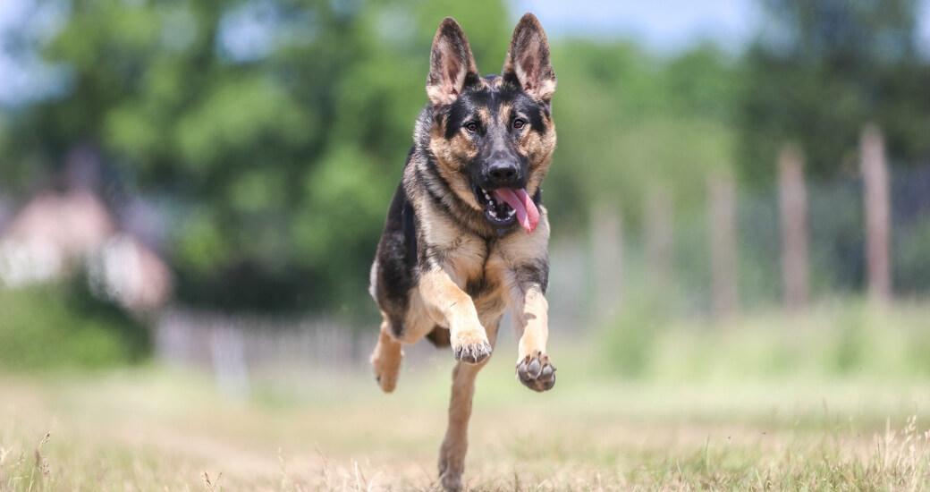 Hundespielzeug, Leinen und Halsbänder günstig kaufen bei Hundesport Nubi - Onlineshop für aktive Hunde