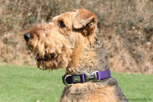 Hunter Halsband lila violett mit Metall Verschluss - günstig kaufen bei Hundesport Nubi