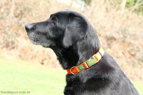 Hunter Halsband orange mit Metall Verschluss - Detail - günstig kaufen bei Hundesport Nubi