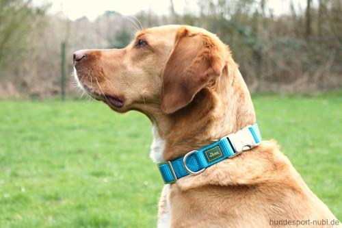 Hunter Halsband petrol mit Metall Verschluss - günstig kaufen bei Hundesport Nubi
