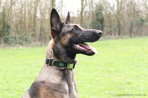 Hunter Halsband schwarz mit Metall Verschluss - Malinois - günstig kaufen bei Hundesport Nubi
