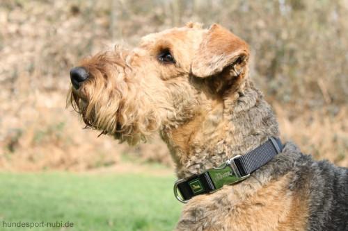 Hunter Halsband schwarz mit Metall Verschluss - günstig kaufen bei Hundesport Nubi
