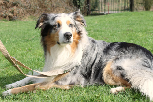 Hunter verstellbare Leine beige - günstig kaufen bei Hundesport Nubi