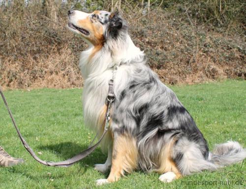 Hunter verstellbare Leine grau - günstig kaufen bei Hundesport Nubi
