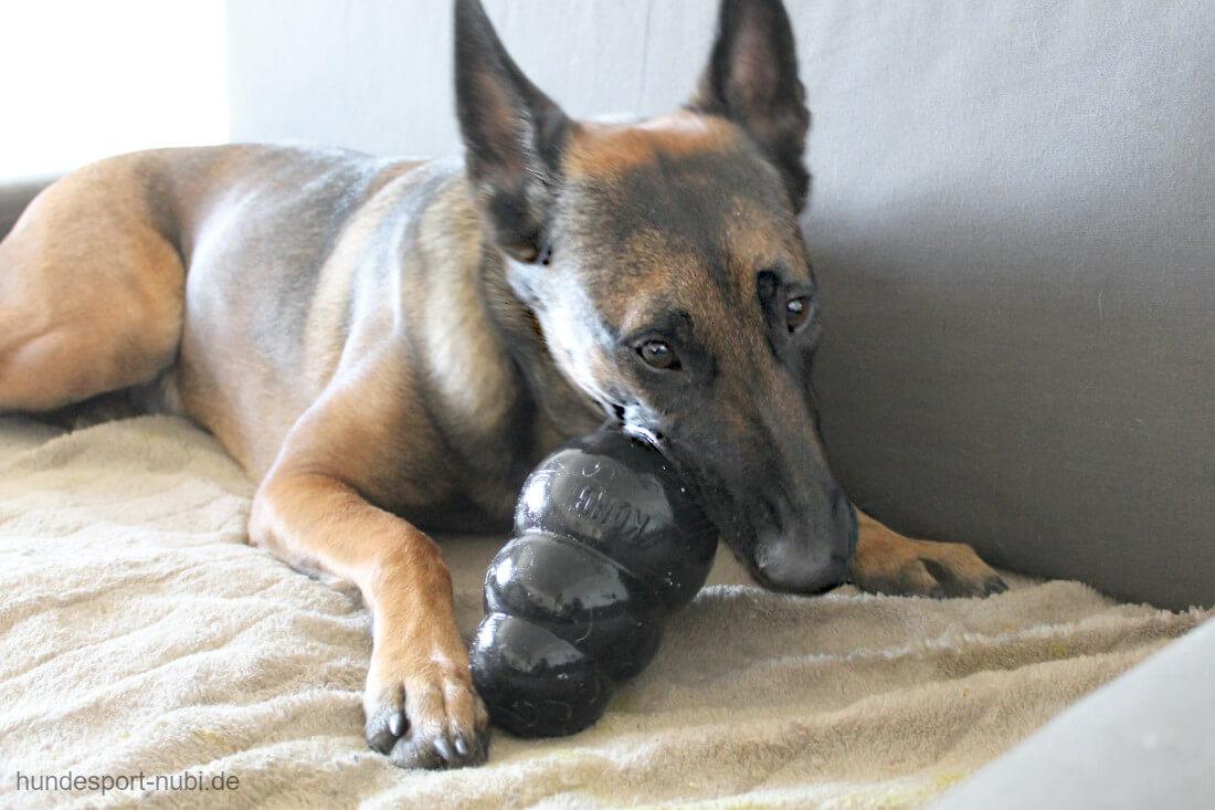 5 leckere Rezepte für den KONG für gesunde Hunde - Belgischer Schäferhund - Hundesport Nubi - Hundeblog