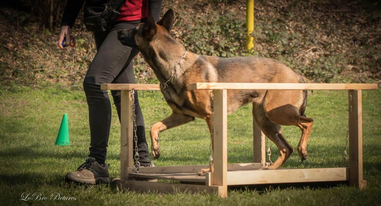 Vorbereitung Begleithundeprüfung - das erste Turnier - Tipps und Tricks - Parcours - Hundesport Nubi
