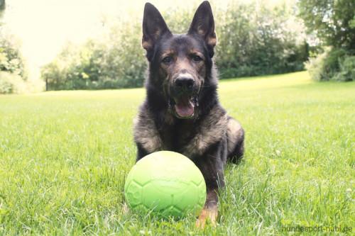 Jolly Soccer Ball mit Schäferhund - Hundespielzeug günstig online kaufen bei Hundesport Nubi