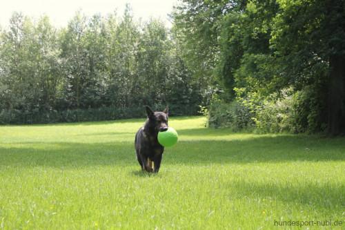 Jolly Soccer Ball mit Schäferhund auf Wiese - Hundespielzeug günstig online kaufen bei Hundesport Nubi 2