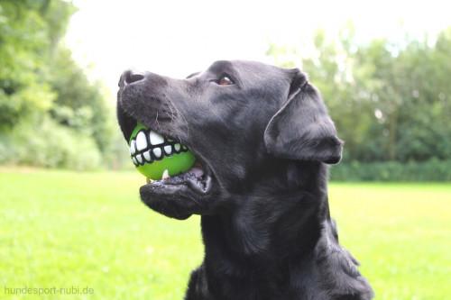 Labrador mit Rogz Grinz Ball mit Zähnen - Hundespielzeug günstig online kaufen bei Hundesport Nubi
