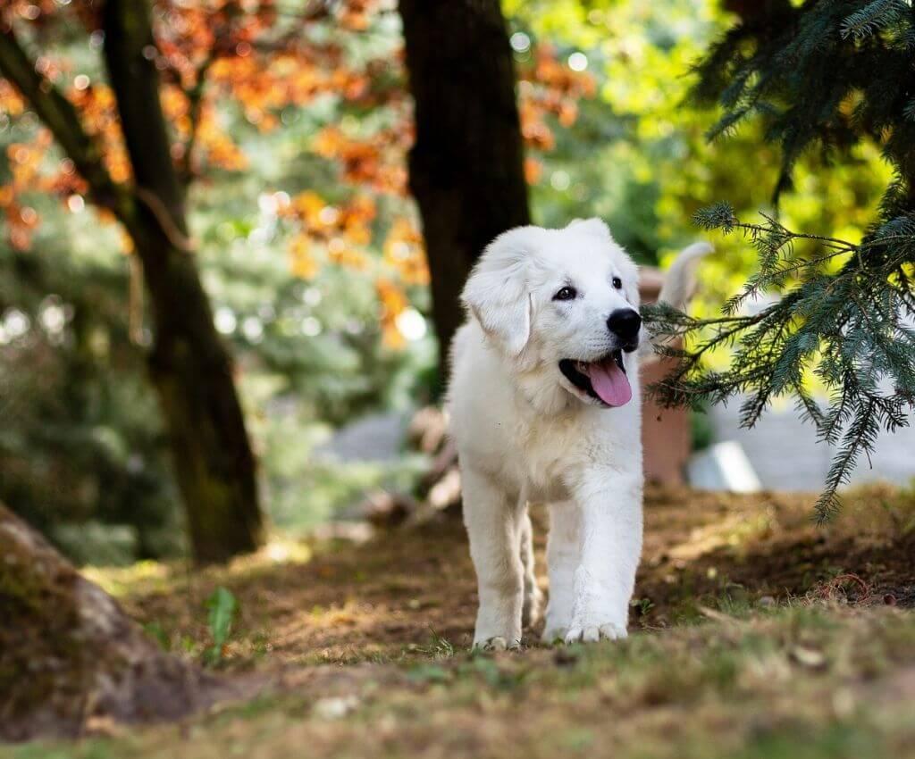 Golden Retriever Welpe - Hundetraining für Welpen und Junghunde, Sarah Both - Buch Rezension - Hundeblog Hundesport Nubi
