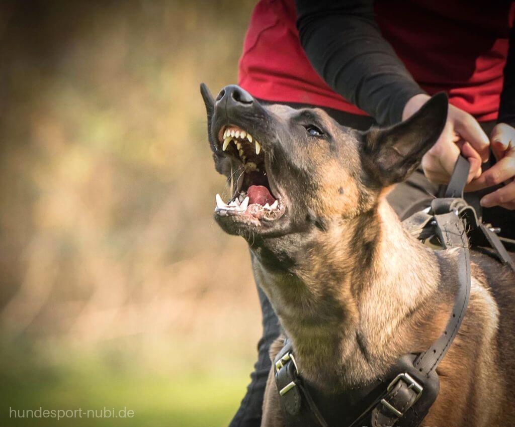 12 Wahrheiten über Sporthunde Die Du Beachten Musst