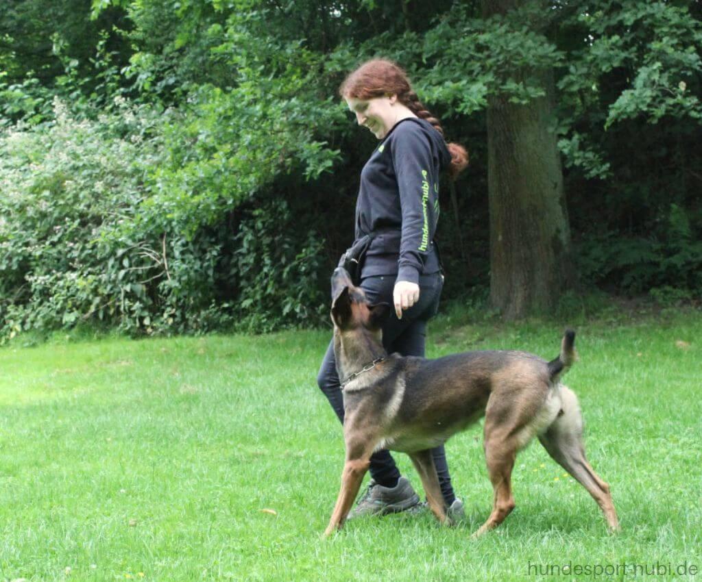 Malinois in der Unterordnung - Shop für Hundezubehör - Hundeblog