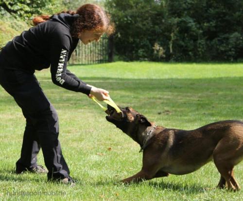 Kehrtwende in der Begleithundeprüfung, Malinois mit Beißwurst - Hundeblog Hundesport Nubi