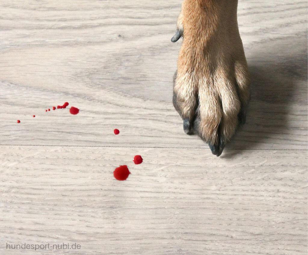 Läufige Hündin, Läufigkeit im Hundetraining - Hundesport Nubi