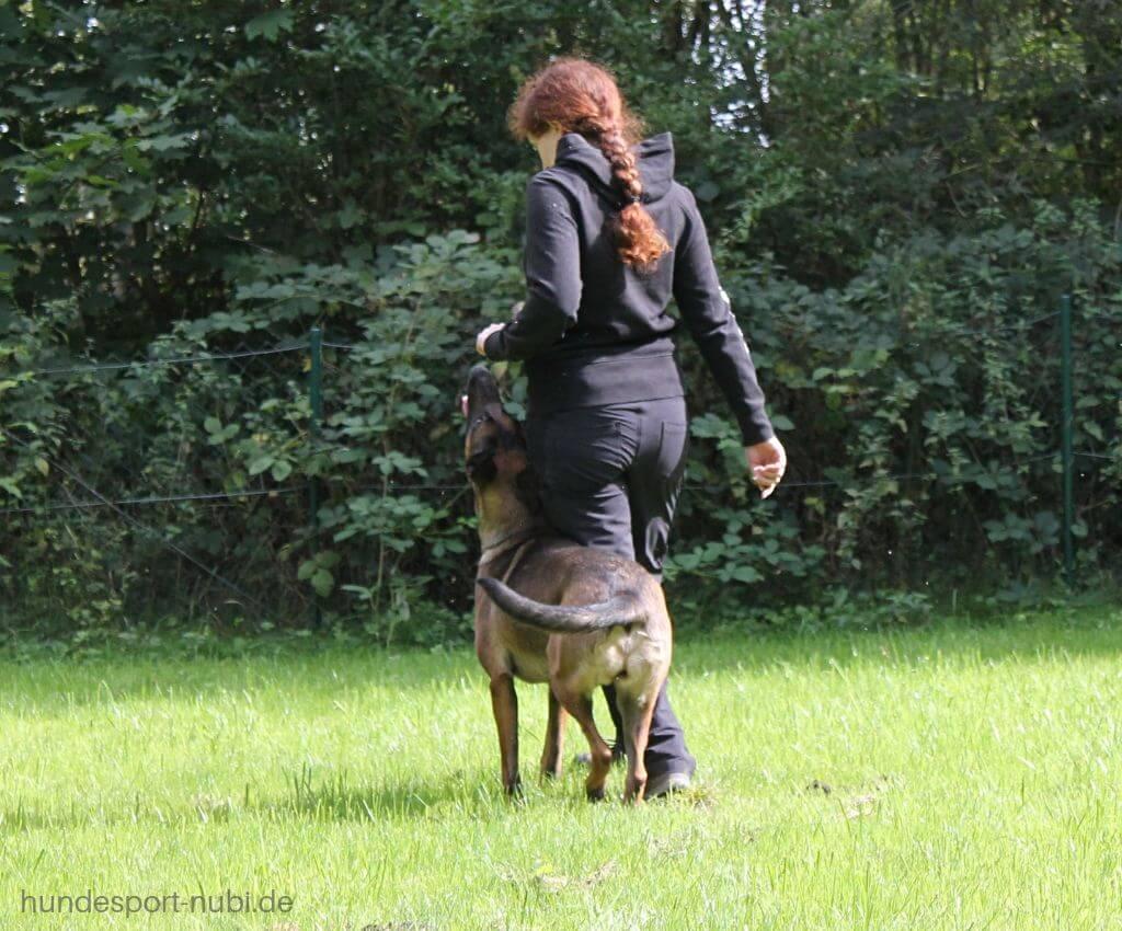 Kehrtwende in der Begleithundeprüfung, 180 Grad Wendung - Hundeblog Hundesport Nubi