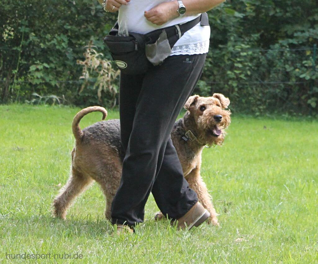 Kehrtwende in der Begleithundeprüfung, Umlaufen vom Hundeführer - Hundeblog Hundesport Nubi