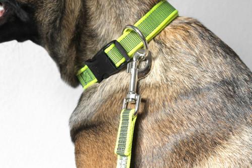 Leine und Halsband in neon gelb, Signalfarbe - Julius K9 - billig online kaufen bei Hundesport Nubi