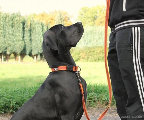 NEON ORANGE Halsband und Leine von Julius K9 - günstig online kaufen bei Hundesport Nubi