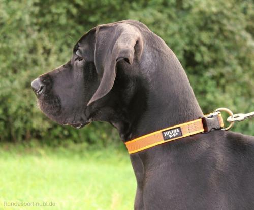 NEON ORANGE Halsband von Julius K9 - günstig online kaufen bei Hundesport Nubi