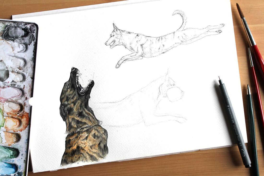 Hollandse Herder Bico, Aquarell Zeichnung - Kalender Hundesport Nubi