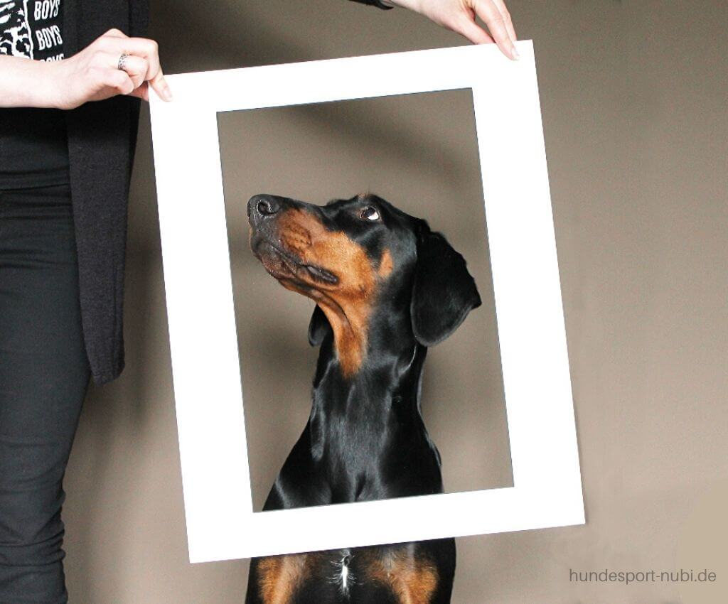 Fotoshooting mit Hund - Dobermann im Rahmen - Hundesport Nubi