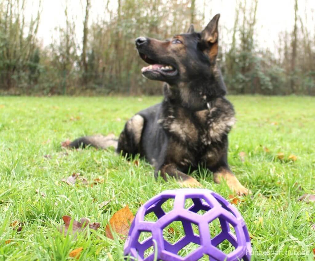 Impulskontrolle beim Hund - Schäferhund - 3 Übungen + Anleitung - Hundesport Nubi Blog