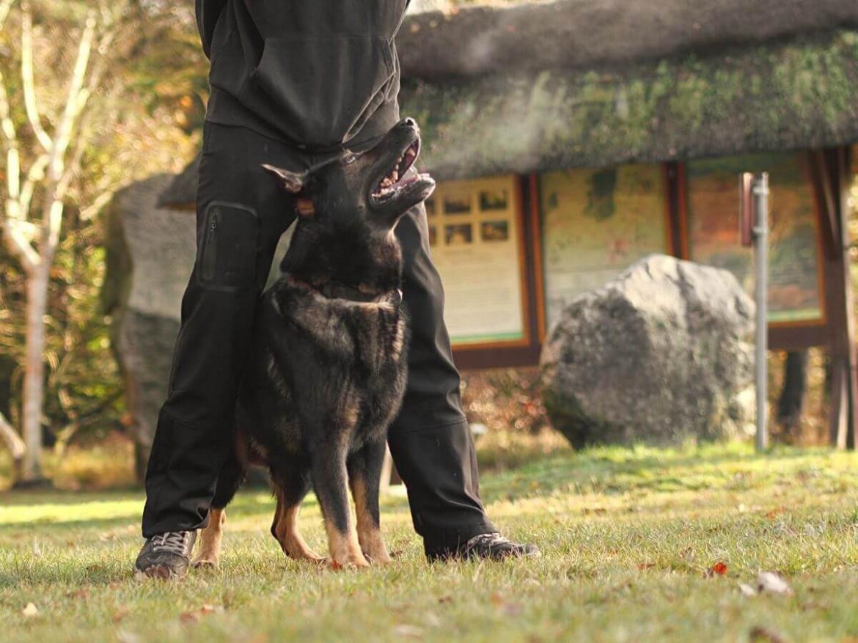 Deutscher Schäferhund_ Training Gehorsam - Hundesport Nubi Blog
