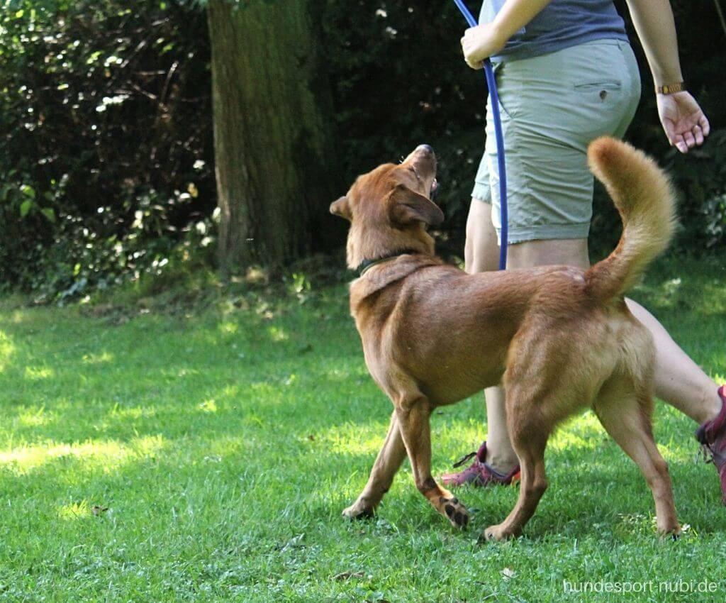 Corona und Hundesport - Fußlaufen - Hundeblog Hundesport Nubi