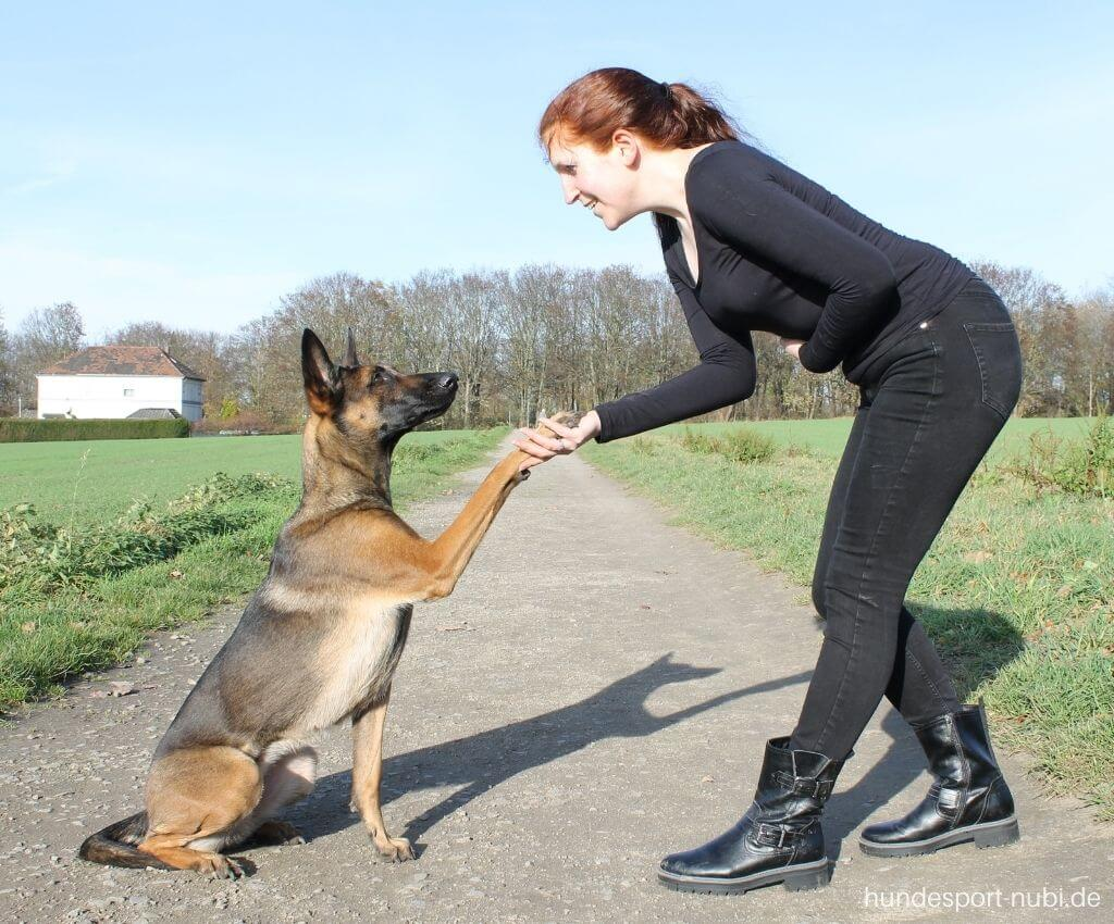 Hundefitness Physio Übungen für Hunde - Hundeblog Hundesport Nubi