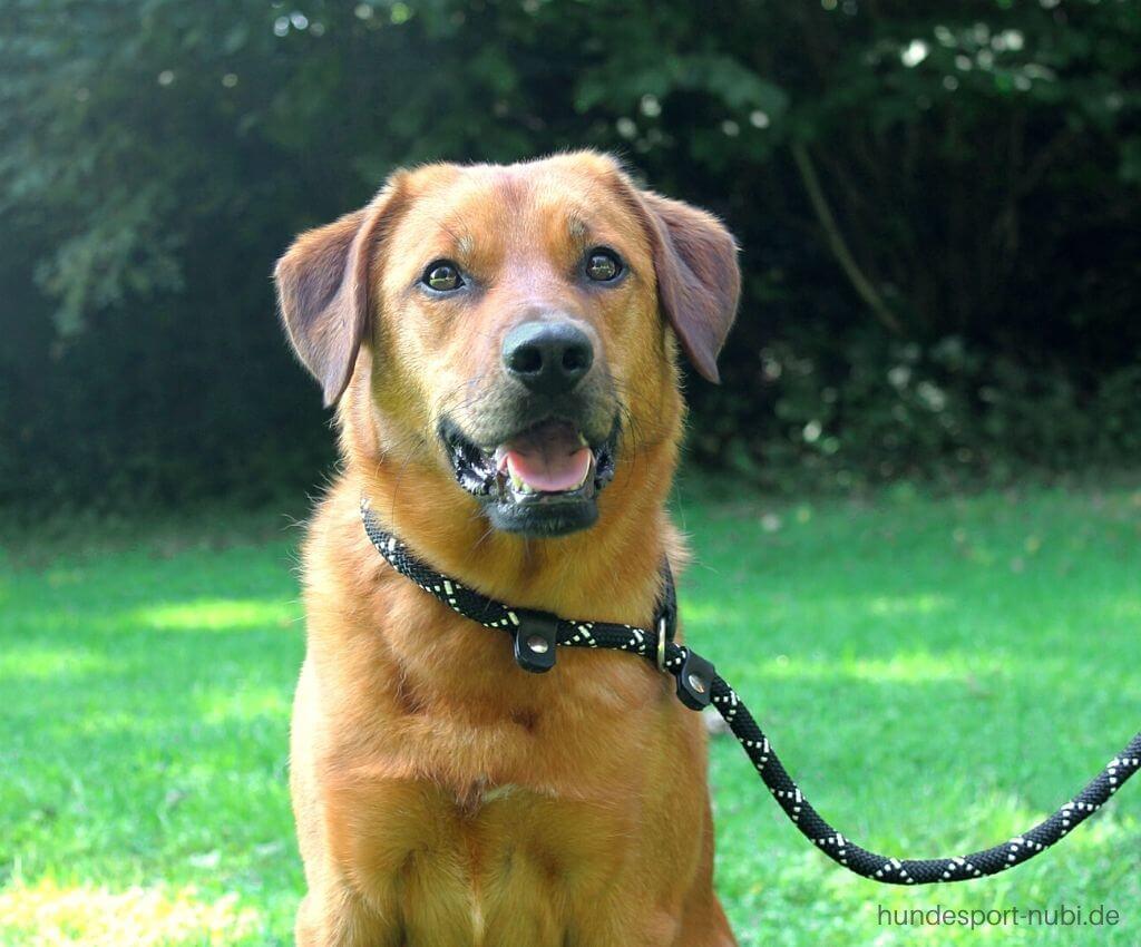 Leinenpflicht für Hunde in der Brut und Setzzeit - Hundesport Nubi Blog