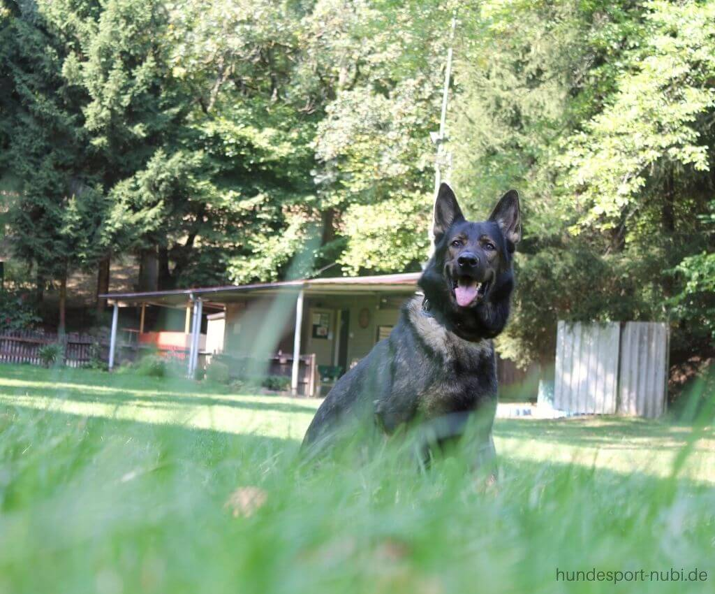 Hundesport-Begriffe einfach erklärt   Hundesport Lexikon